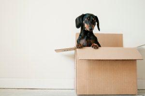 Help Older Loved Ones Move