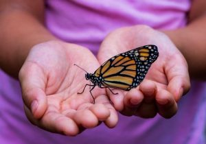 Turn Your Backyard Into a Butterfly Sanctuary